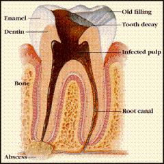 Endodontic_Dentistry